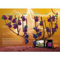 POSTER Stammbaum der Dinos
